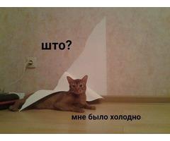 Ищу подругу 24-30, Киев